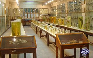 موزه جانور شناسی-تهران شناسی